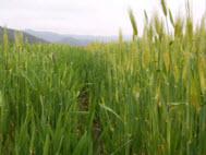 ไฟบริลเอ็กซ์แทร็ค Fibril Extract พืชตระกูลหญ้าที่มีเฉพาะในประเทศเกาหลี ที่ช่วยกักเก็บความชุ่มชื่นให้กับผิวได้ดี ในทุกสภาพอากาศ