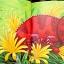 Chameleon's Crazy Colours thumbnail 2