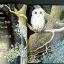 Owl Babies thumbnail 3