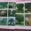 """""""สารานุกรมไม้ประดับในประเทศไทย เล่ม1-2""""โดยบ้านและสวน ปี2525 thumbnail 12"""