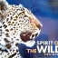 Spirit of the Wild thumbnail 1