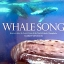 Whale Song: Journeys into the Secret Lives of the North Atlantic Humpbacks thumbnail 1