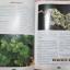 """""""สารานุกรมไม้ประดับในประเทศไทย เล่ม1""""โดยสำนักพิมพ์บ้านและสวน กว้าง18ยาว24.5ซม. พิมพ์ปี2540 thumbnail 10"""