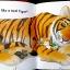 Tiger thumbnail 5