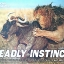 Deadly Instinct thumbnail 1