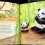 Lucky Bamboo thumbnail 2