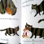 Grumpy Cat thumbnail 4