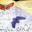 Butterfly Fairy's Secret thumbnail 3