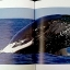 Whale Song: Journeys into the Secret Lives of the North Atlantic Humpbacks thumbnail 4